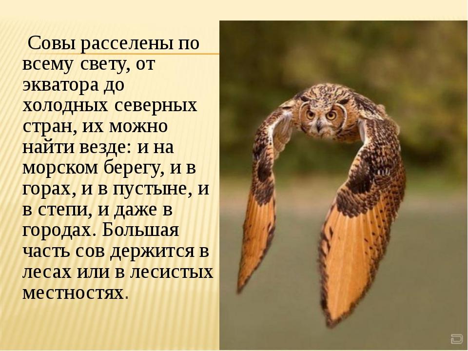 Совы расселены по всему свету, от экватора до холодных северных стран, их мо...