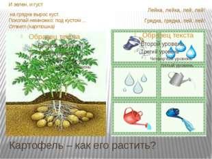 Картофель – как его растить? И зелен, и густ на грядке вырос куст. Покопай не