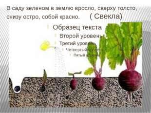 В саду зеленом в землю вросло, сверху толсто, снизу остро, собой красно. ( Св