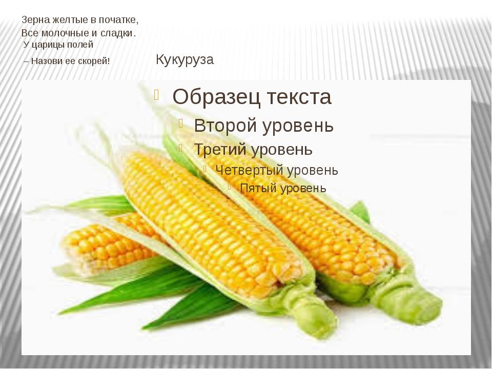 Зерна желтые в початке, Все молочные и сладки. У царицы полей – Назови ее ско...