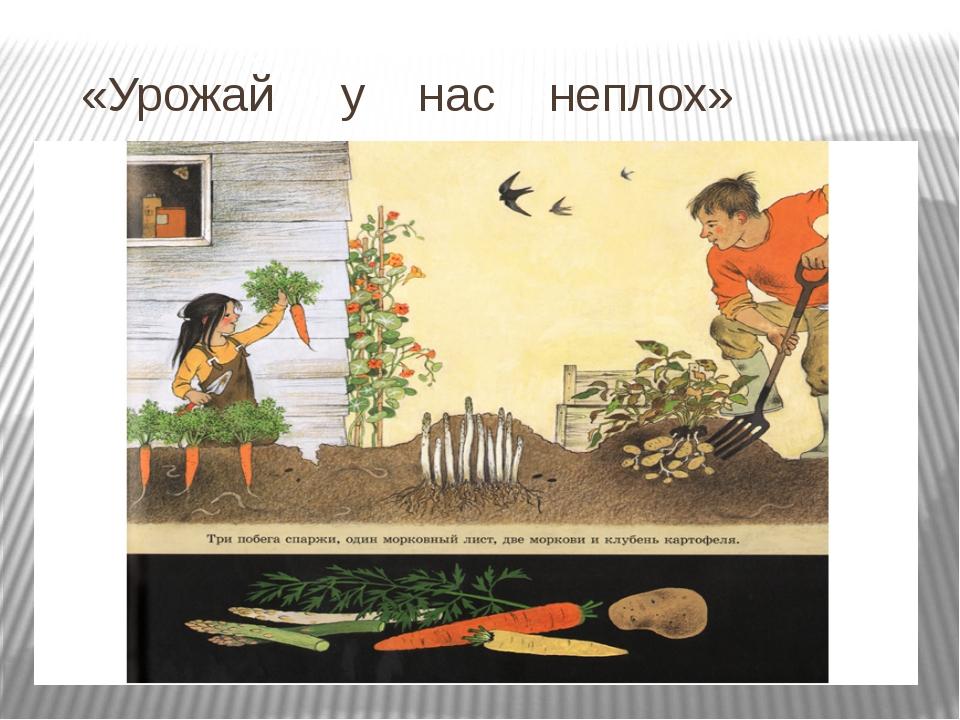 «Урожай у нас неплох»