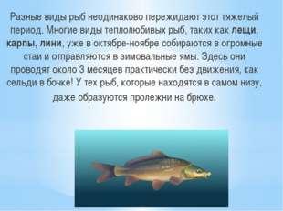 Разные виды рыб неодинаково пережидают этот тяжелый период. Многие виды тепло