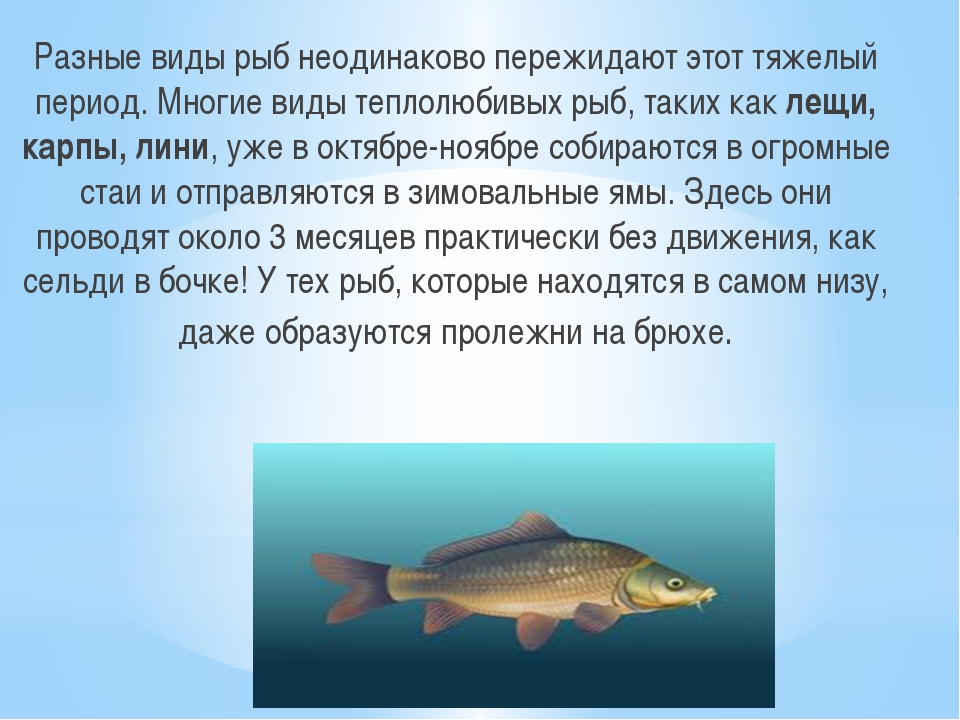 Разные виды рыб неодинаково пережидают этот тяжелый период. Многие виды тепло...