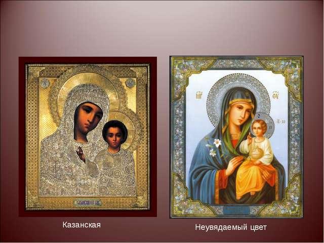 Казанская Неувядаемый цвет