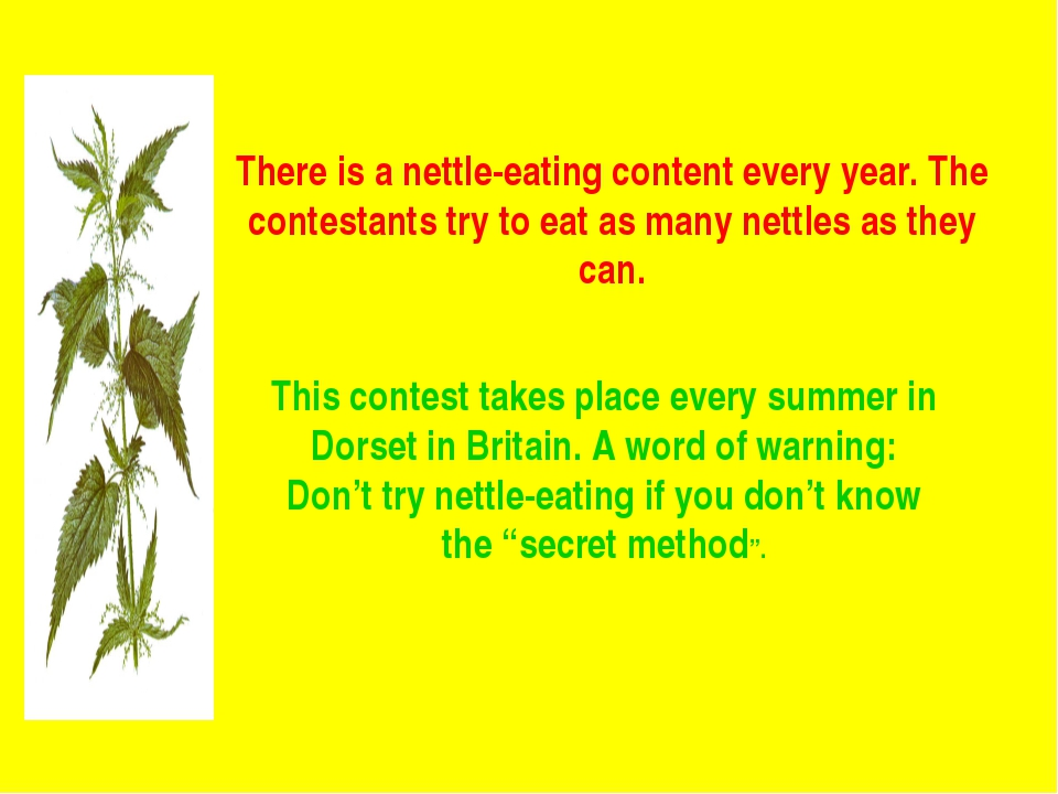There is a nettle-eating content every year. The contestants try to eat as ma...