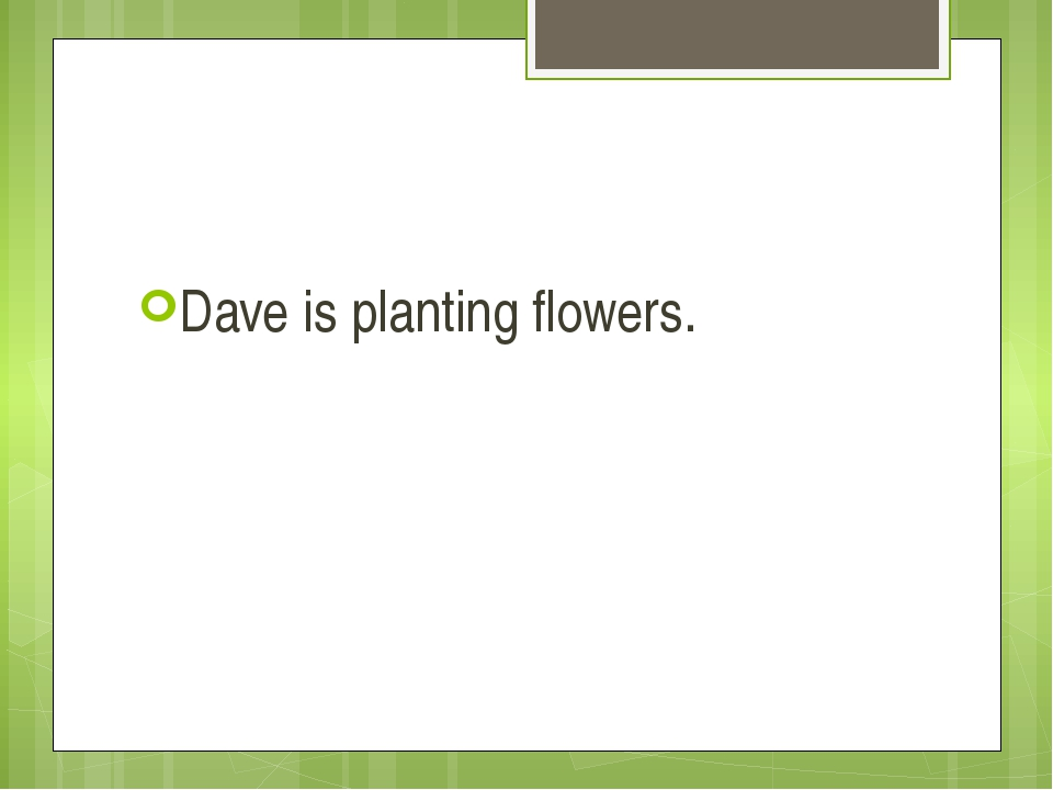 Dave is planting flowers.