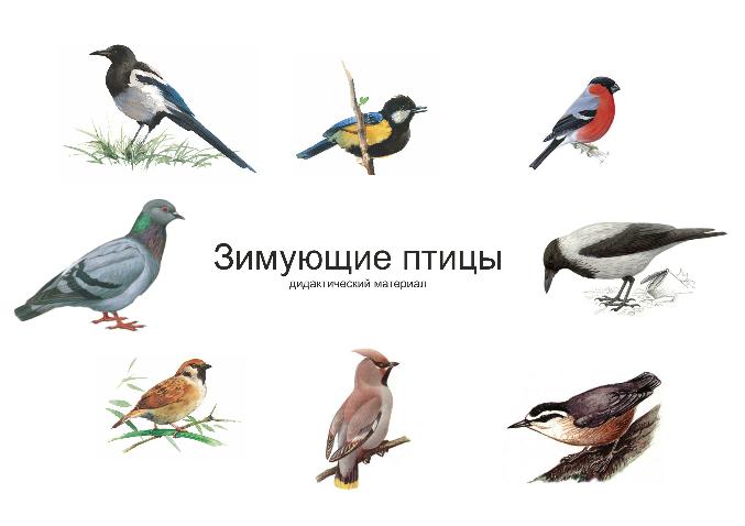 http://dovosp.ru/insertfiles/images/i_1a6cc5f1117f270c_html_39c613af.jpg