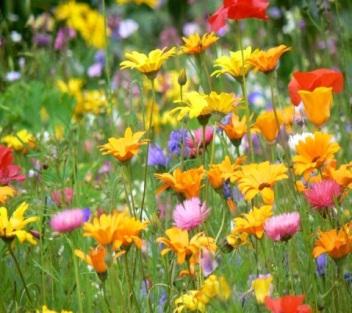 Информатор про цветы полевые и магазинные