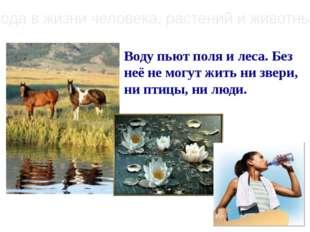 Вода в жизни человека, растений и животных Воду пьют поля и леса. Без неё не