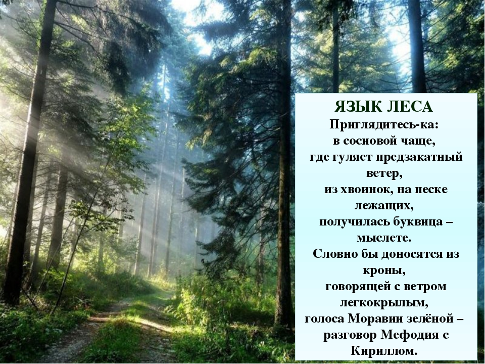 ЯЗЫК ЛЕСА Приглядитесь-ка: в сосновой чаще, где гуляет предзакатный ветер,...