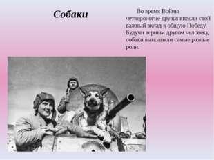 Собаки Во время Войны четвероногие друзья внесли свой важный вклад в общую