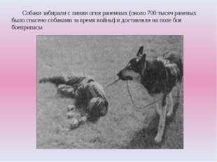 Собаки забирали с линии огня раненных (около 700 тысяч раненых было спасено