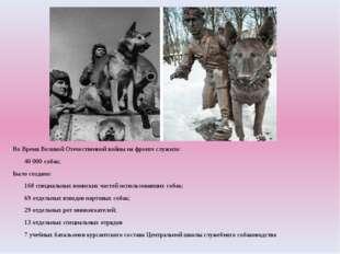 Во Время Великой Отечественной войны на фронте служило: 40000 собак; Было с