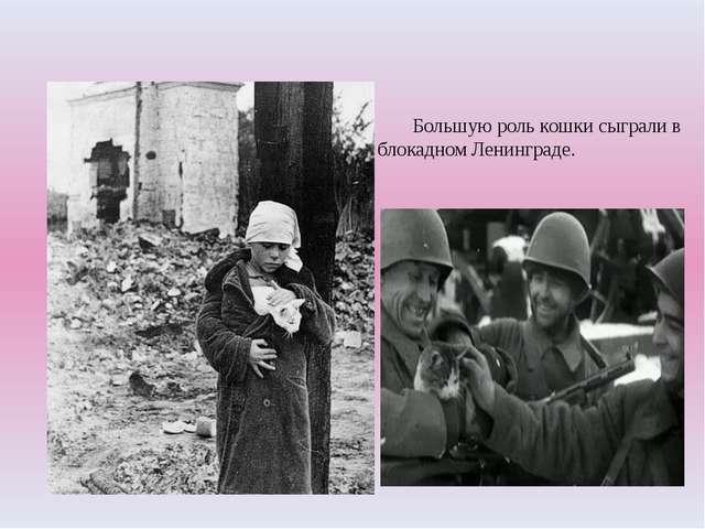 Большую роль кошки сыграли в блокадном Ленинграде.