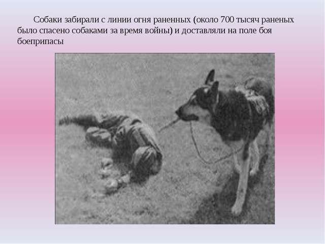 Собаки забирали с линии огня раненных (около 700 тысяч раненых было спасено...
