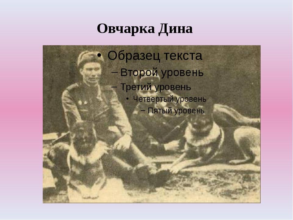Овчарка Дина