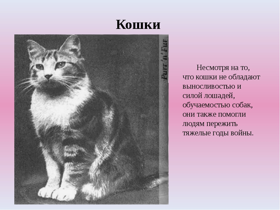 Кошки Несмотря на то, что кошки не обладают выносливостью и силой лошадей, о...