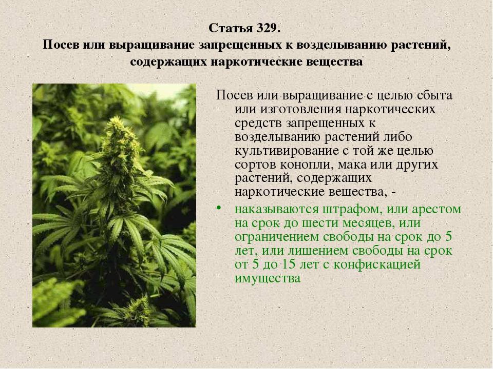Статья за марихуаны как влияет марихуана на психику