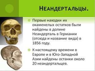 Первые находки их окаменелых остатков были найдены в долине Неандерталь в Гер