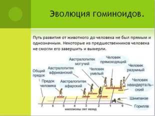 Эволюция гоминоидов. Путь развития от животного до человека не был прямым и о