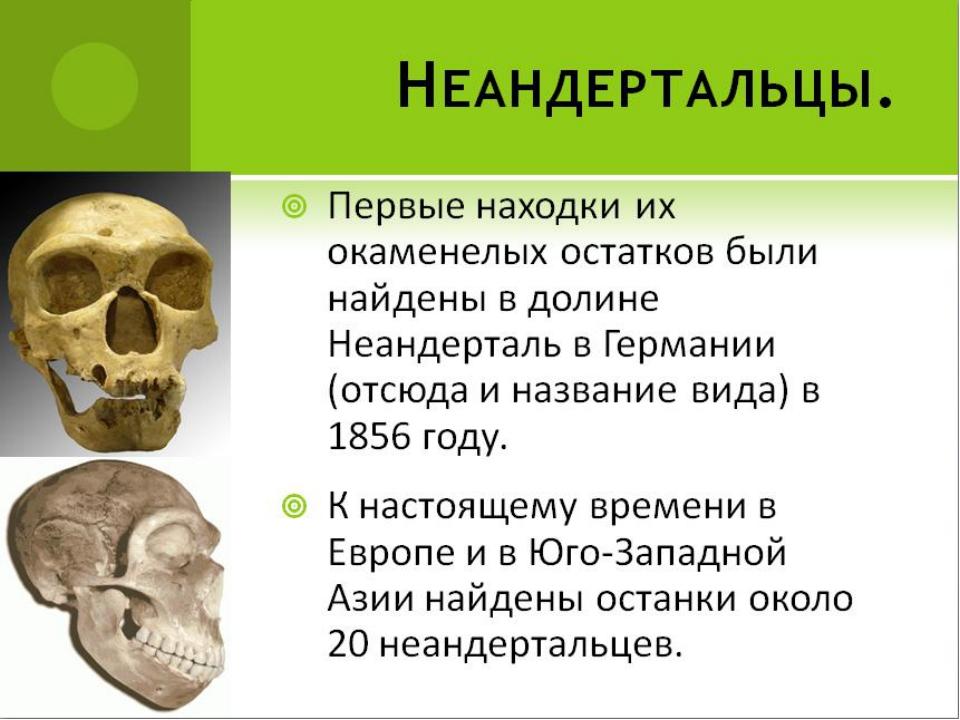 Первые находки их окаменелых остатков были найдены в долине Неандерталь в Гер...