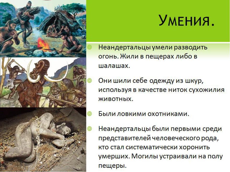 Умения. Неандертальцы умели разводить огонь. Жили в пещерах либо в шалашах. О...
