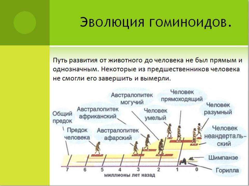 Эволюция гоминоидов. Путь развития от животного до человека не был прямым и о...