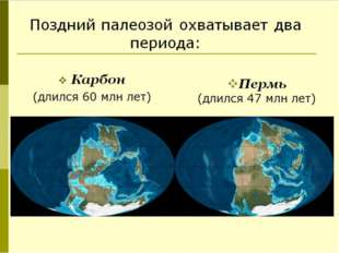 Карбон (длился 60 млн лет) Поздний палеозой охватывает два периода: Пермь (д