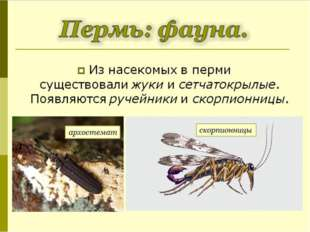 Из насекомых в перми существовалижуки исетчатокрылые. Появляютсяручейники