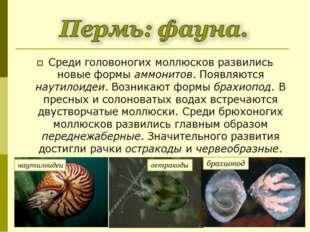 Среди головоногих моллюсков развились новые формы аммонитов. Появляются наути