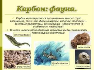 Карбон характеризуется процветанием многих групп организмов, таких как,форам