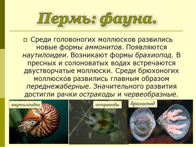 Среди головоногих моллюсков развились новые формы аммонитов. Появляются наути...