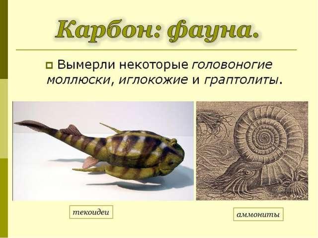 Вымерли некоторыеголовоногие моллюски,иглокожиеиграптолиты. Карбон: фауна...
