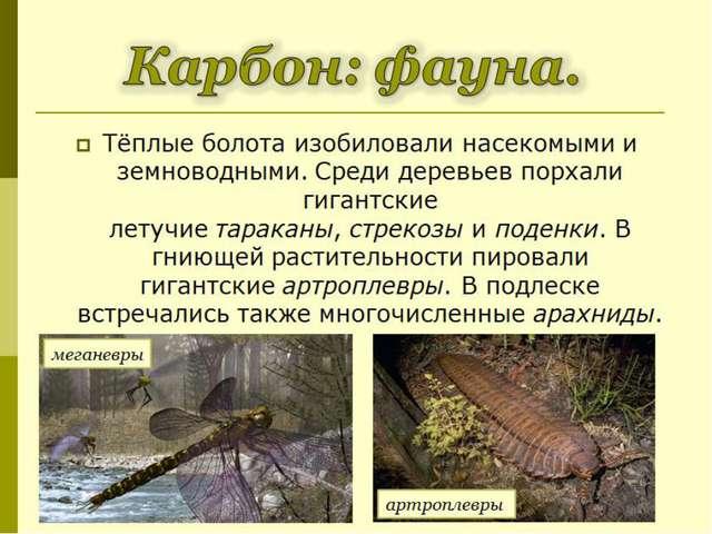 Тёплые болота изобиловали насекомыми и земноводными. Среди деревьев порхали г...