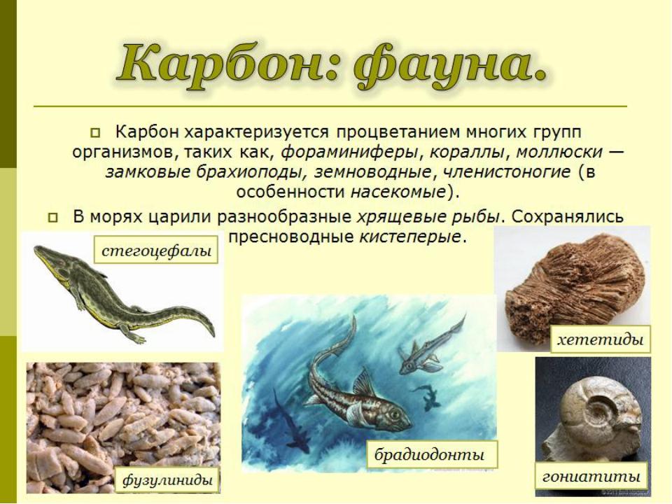 Карбон характеризуется процветанием многих групп организмов, таких как,форам...