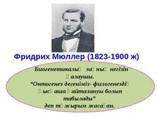 """Фридрих Мюллер (1823-1900 ж) Биогенетикалық заңның негізін қалаушы. """"Онтоген"""