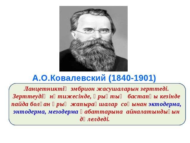 А.О.Ковалевский (1840-1901) Ланцетниктің эмбрион жасушаларын зерттеді. Зертт...