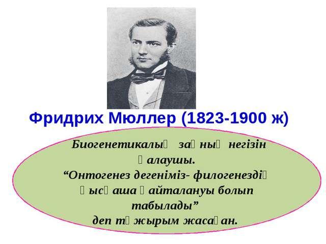 """Фридрих Мюллер (1823-1900 ж) Биогенетикалық заңның негізін қалаушы. """"Онтоген..."""