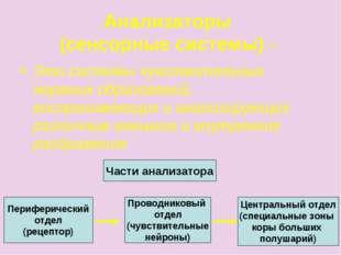 Анализаторы (сенсорные системы) - Это системы чувствительных нервных образова