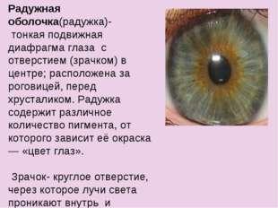 Радужная оболочка(радужка)- тонкая подвижная диафрагма глаза с отверстием (зр