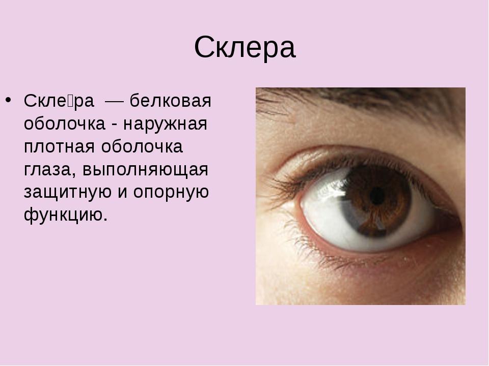 Склера Скле́ра — белковая оболочка - наружная плотная оболочка глаза, выполня...