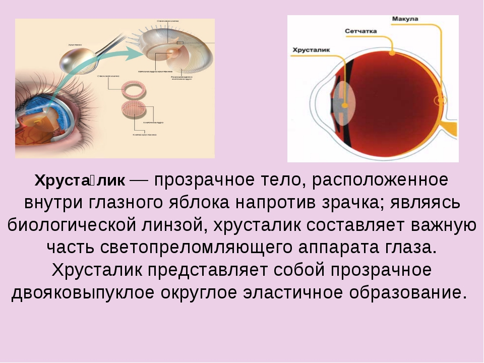 Хруста́лик — прозрачное тело, расположенное внутри глазного яблока напротив з...