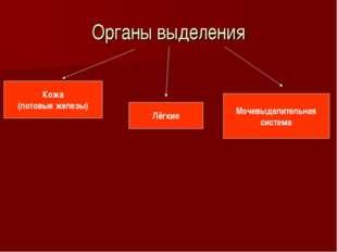 Органы выделения Кожа (потовые железы) Лёгкие Мочевыделительная система
