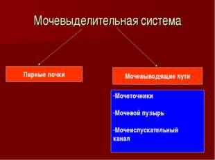 Мочевыделительная система Парные почки Мочевыводящие пути Мочеточники Мочевой