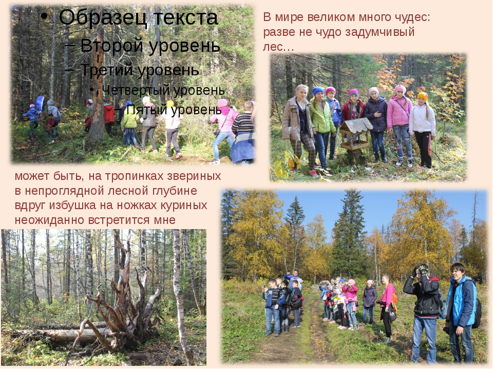 В мире великом много чудес: разве не чудо задумчивый лес… может быть, на троп...