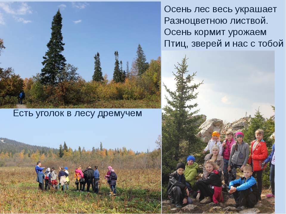 Есть уголок в лесу дремучем Осень лес весь украшает Разноцветною листвой. Осе...