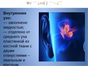Внутренний отдел. Внутреннее ухо: — заполнено жидкостью; — отделено от средн