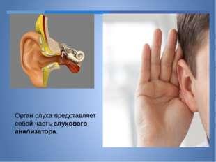 Орган слуха представляет собой часть слухового анализатора.