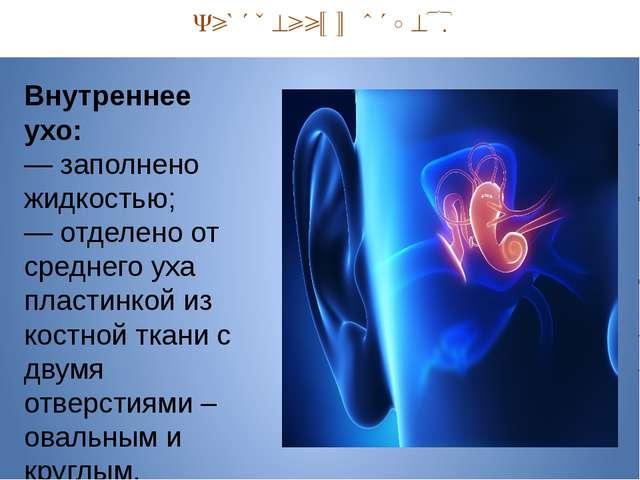 Внутренний отдел. Внутреннее ухо: — заполнено жидкостью; — отделено от средн...