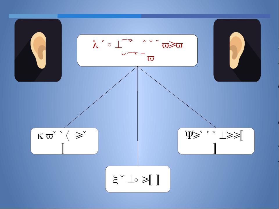 Отделы органа слуха Средний Наружный Внутренний